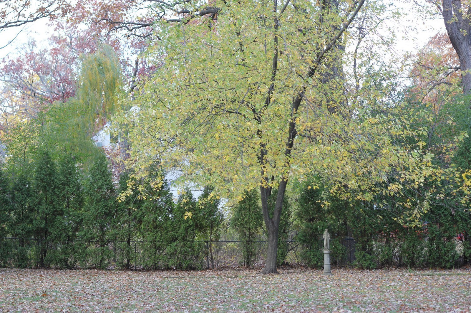 Real Estate Photography - 231 Woodlawn Ave, Winnetka, IL, 60093 - A wall of Arbor Vitae and a Quiet Reflection Place