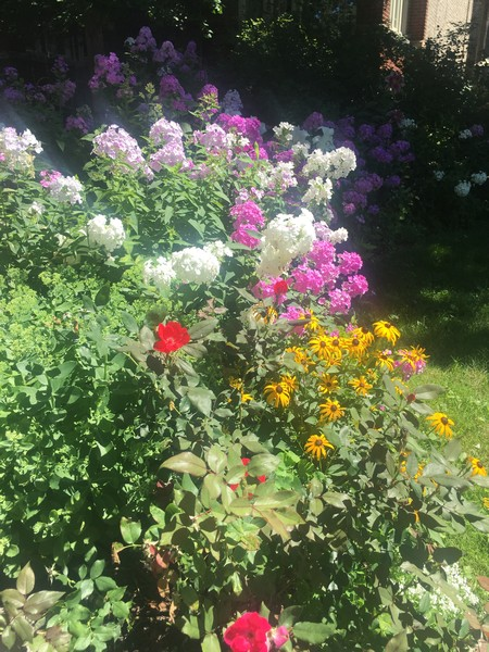 Real Estate Photography - 4101 N Greenview, Chicago, IL, 60613 - Yard flowers in full bloom