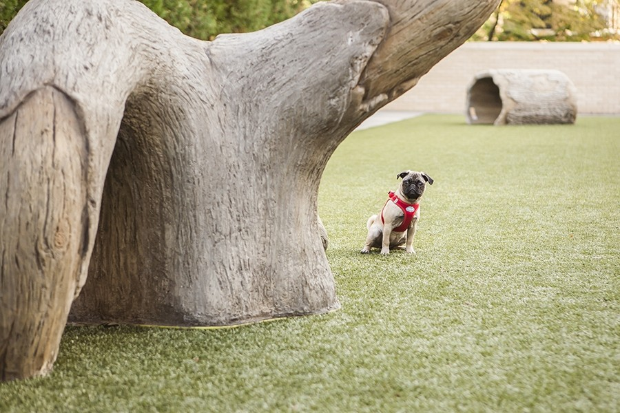 Real Estate Photography - 2550 N Lakeview, Unit S1205, Chicago, IL, 60614 - Dog Exercise Area