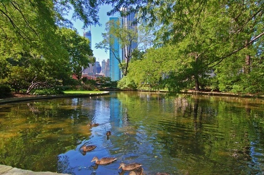 Real Estate Photography - 505 N Lake Shore Drive, #907, Chicago, IL, 60611 - Pond at Park