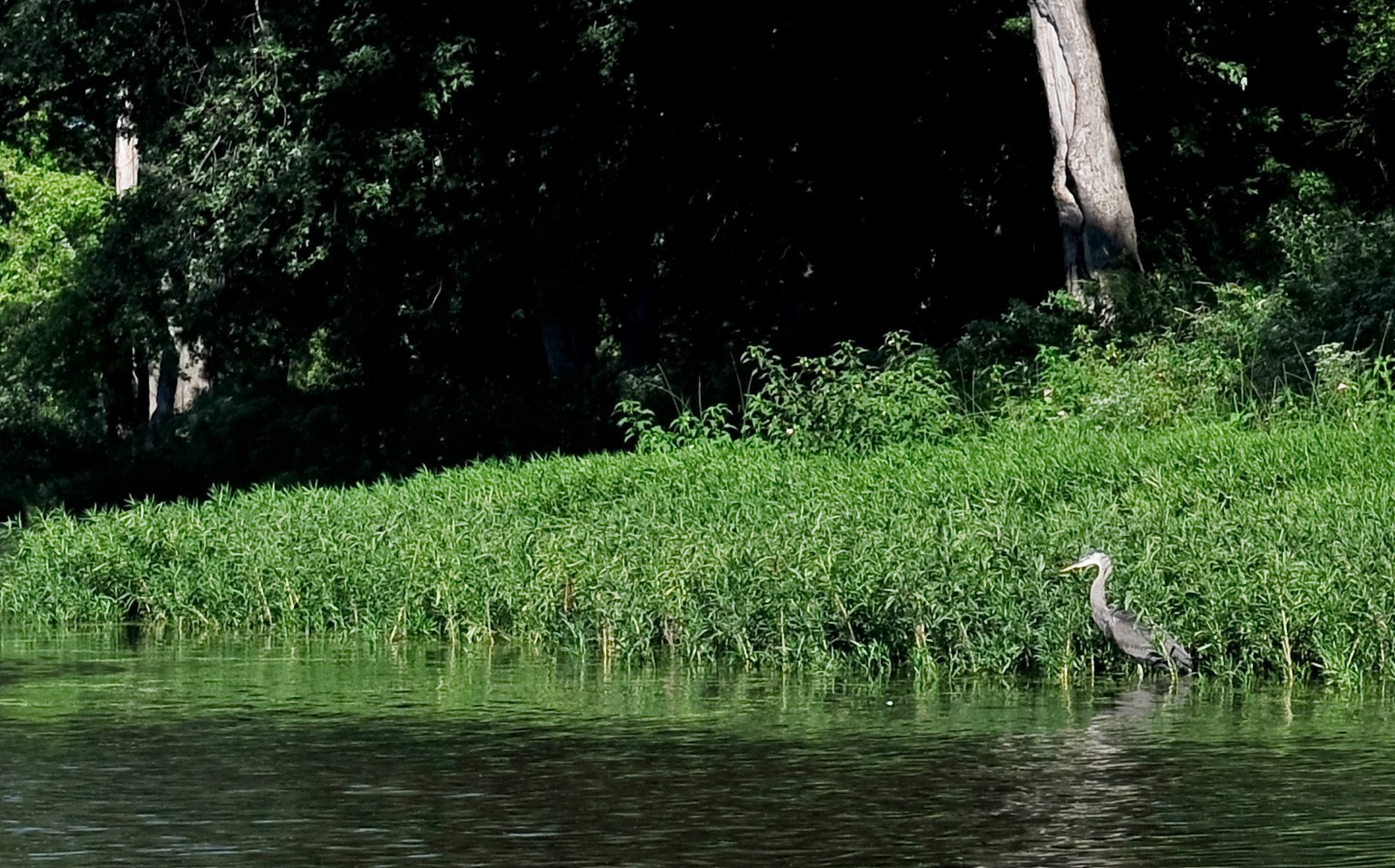 Real Estate Photography - 23250 Florian Dr, Wilmington, IL, 60481 - Heron off Luther Island's river bank