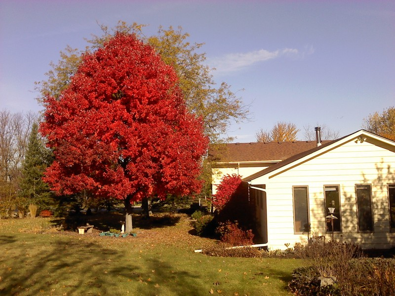 Real Estate Photography - S831 Skyline Drive, Batavia, IL, 60510 - Fall Foliage
