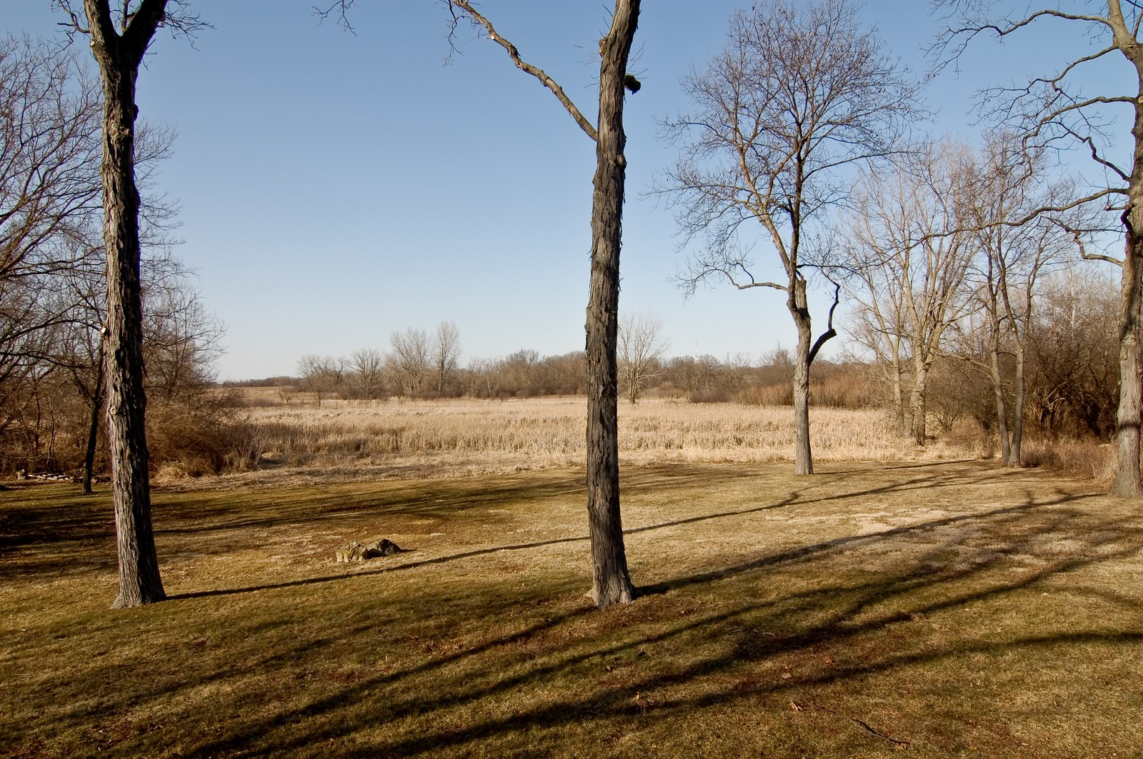Real Estate Photography - 1S621 Bender, West Chicago, IL, 60185 - Back Yard