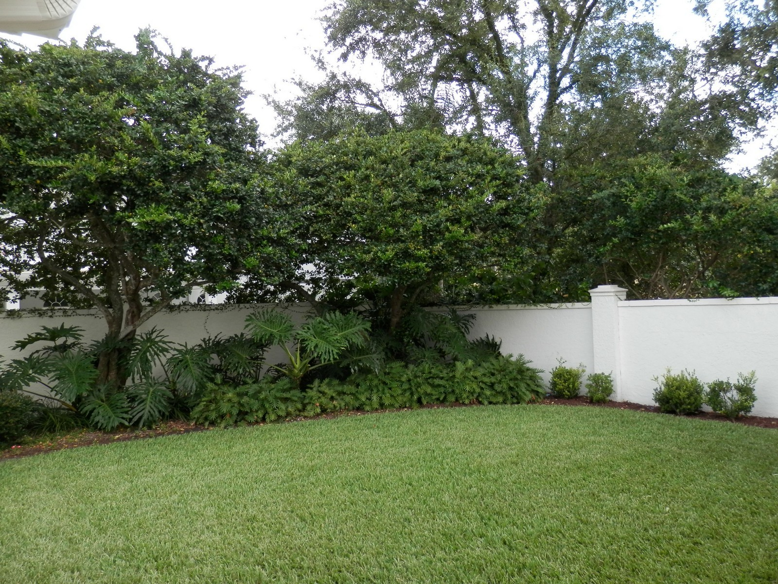 Real Estate Photography - 4922 New Providence Ave, Tampa, FL, 33629 - Back Yard