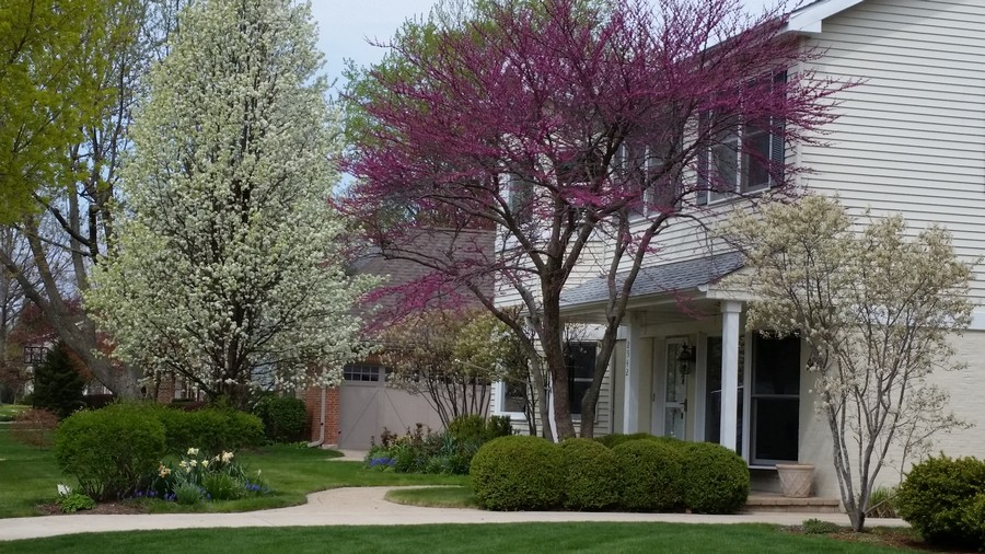 Real Estate Photography - 2542 Illinois Road, Northbrook, IL, 60062 - Seasonal Landscaping