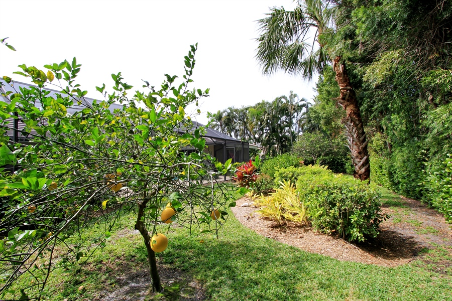 Real Estate Photography - 521 Turtle Hatch Road, Naples, FL, 34103 - Back Yard