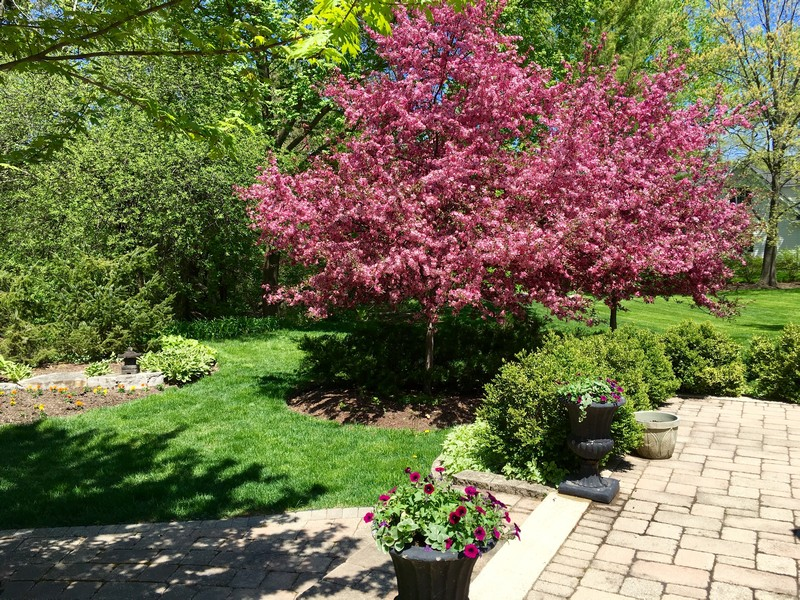 Real Estate Photography - 506 Elm Road, Barrington, IL, 60010 - Back Yard with Trees in Full Bloom