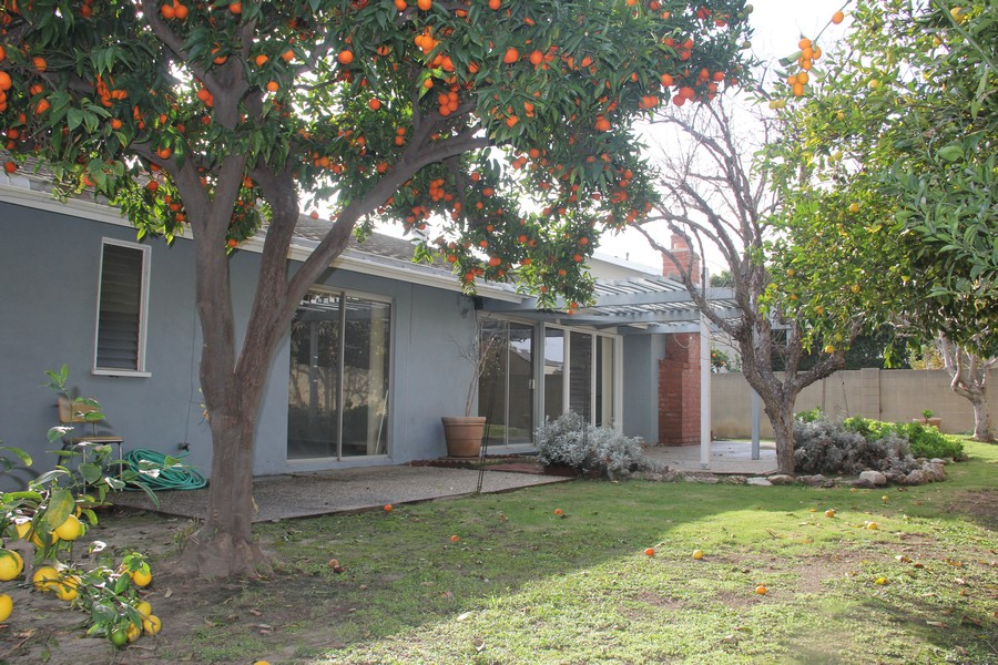 Real Estate Photography - 5051 Dartmouth Ave, Westminster, CA, 92683 - Back Yard with bountiful producing citrus trees
