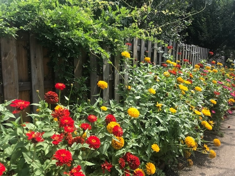 Real Estate Photography - 2101 N Grant Ave, Wilmington, DE, 19806 - Zinnias in bloom!