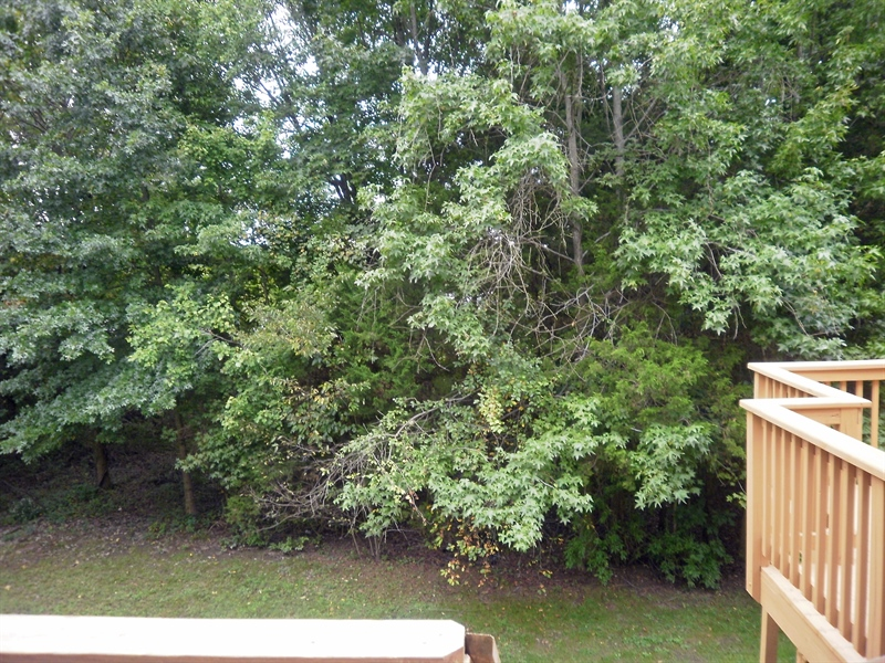 Real Estate Photography - 42 Highland Cir, Newark, DE, 19713 - View from rear deck of the treed back yard