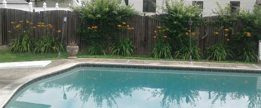 Real Estate Photography - 23 Dunbar Rd, Newark, DE, 19711 - Landscaping around Pool