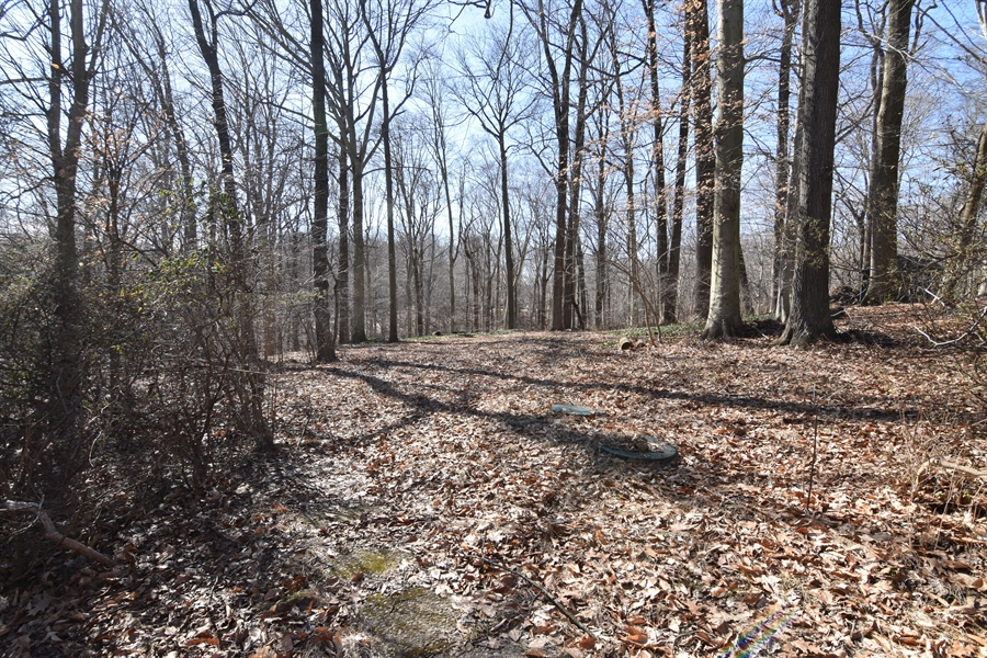 Real Estate Photography - 2 Galaxy Dr, Newark, DE, 19711 - 1.9 Acres. Looking into the woods. Creek at bottom