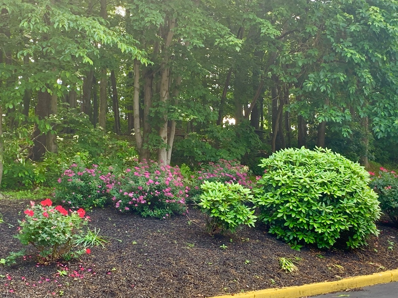Real Estate Photography - 4603 Birch Cir, Wilmington, DE, 19808 - Beautifully Landscaped Grounds