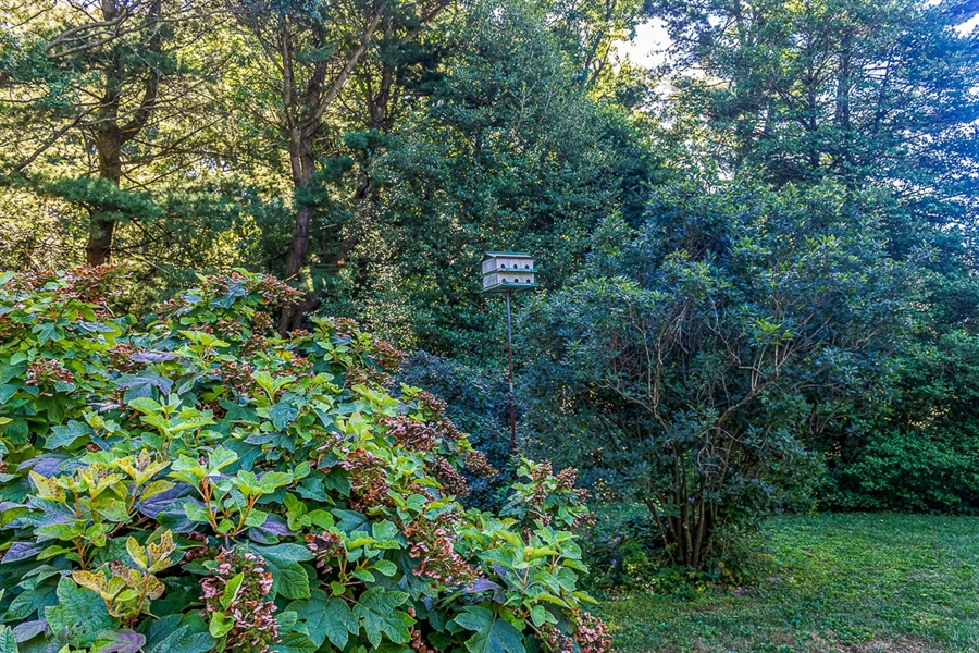 Real Estate Photography - 700 Fawn Rd, Newark, DE, 19711 - lush trees and plants with a bird condo!