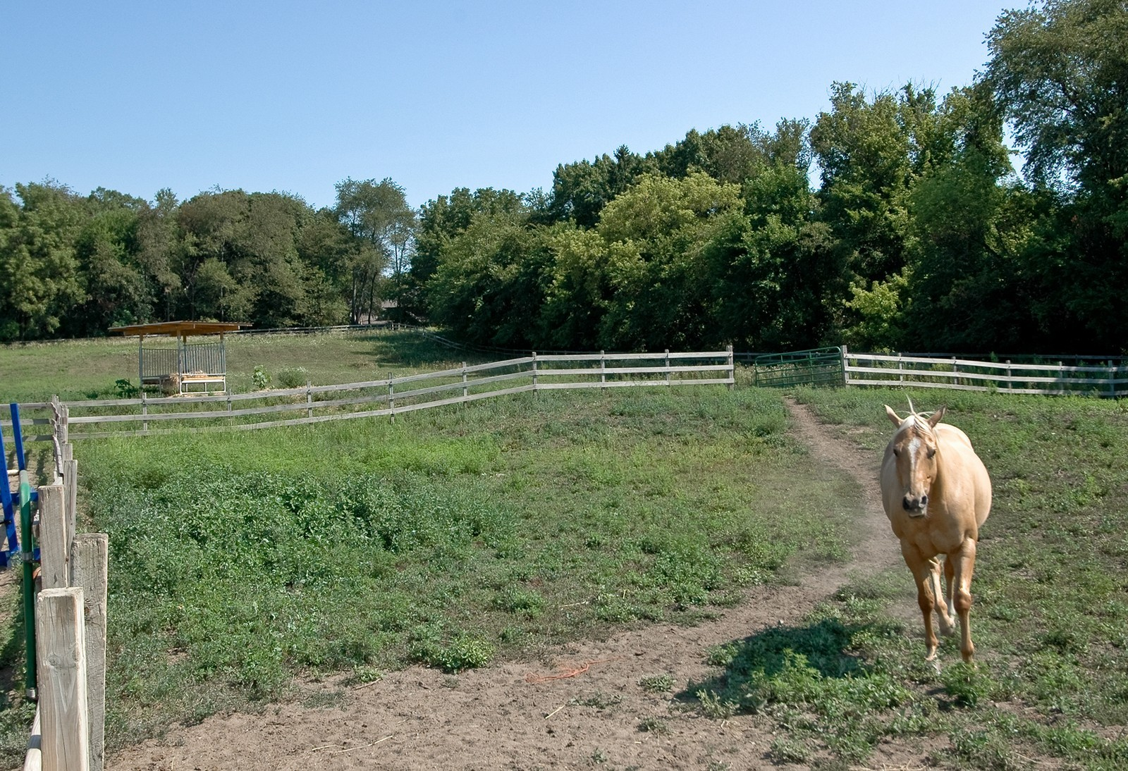 Real Estate Photography - 40W960 Chippewa Pass, Elgin, IL, 60124 - Mud Lot & Pasture Turn-Out