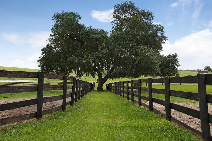 Real Estate Photography - 36225 Covington Rd, Dade City, FL, 33525 - Location 12